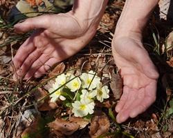 Blumenlogo für Nachhaltigkeit